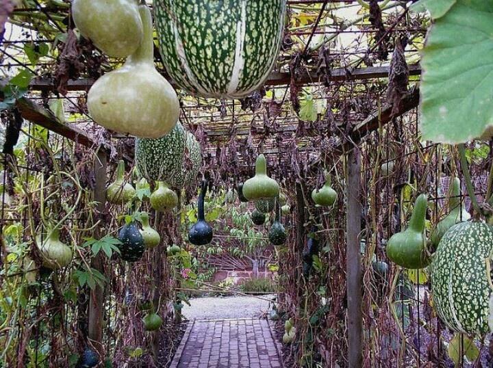 Hanging squash garden garden pinterest for Hanging vegetable garden ideas