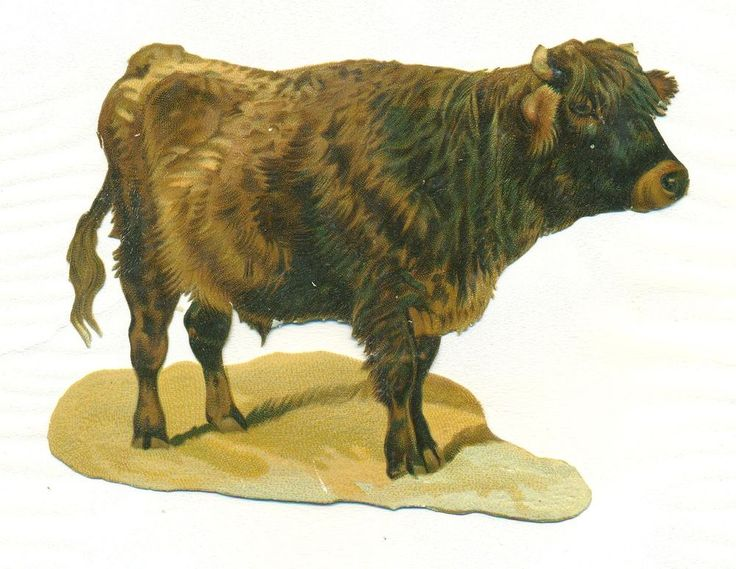 large  victorian scrap bull