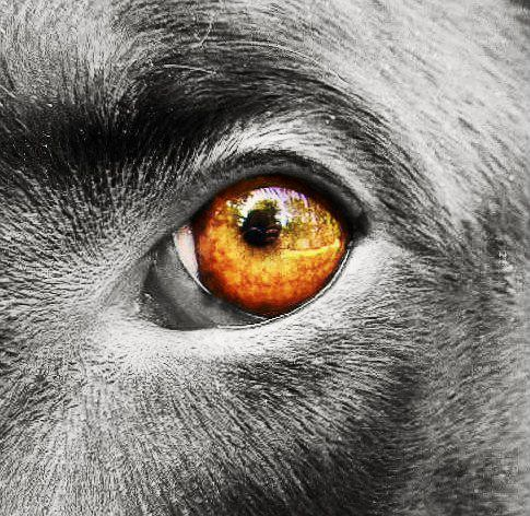 Color Splash Animals   Dogs eye view with a color splash by    Color Splash Eyes