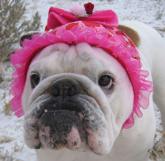 dog valentine hat