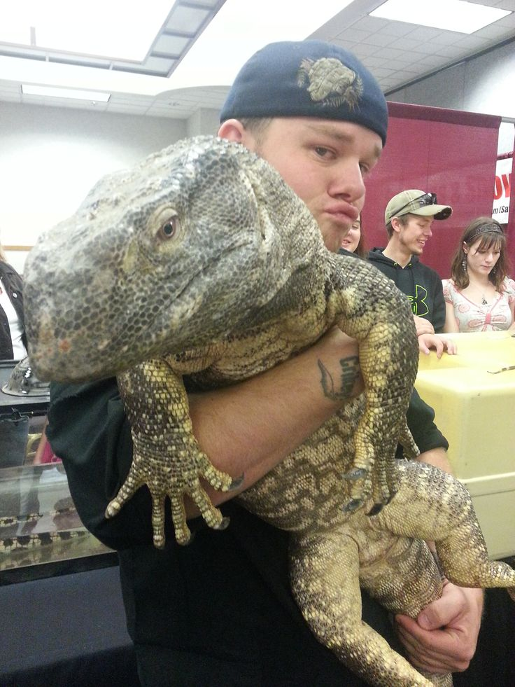 Lizards For Sale - Monitors For Sale - First Choice Reptiles
