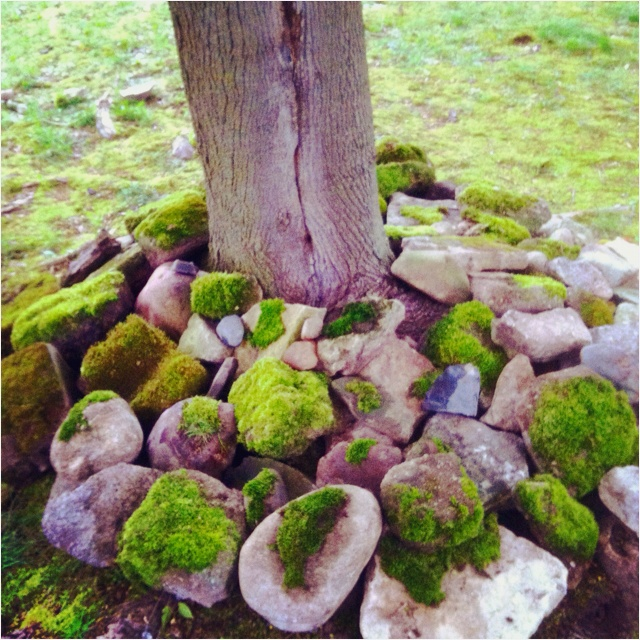 Landscaping Ideas With Moss Rocks For Crafts