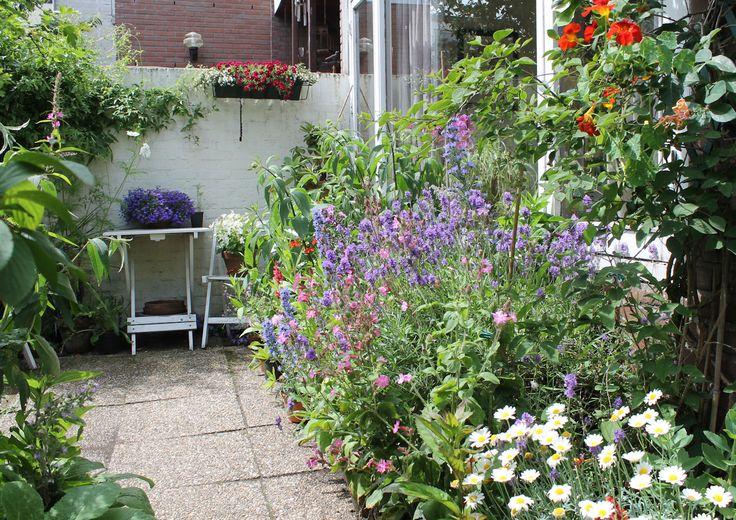 Small Garden Border Plants Green Pinterest