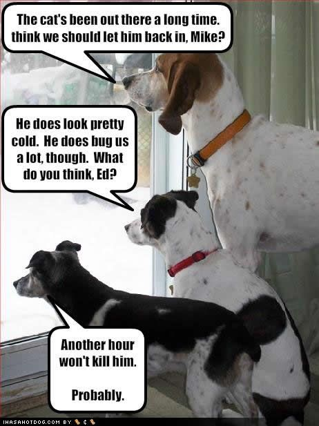 Funny Cats And Dogs With Words Funny Cat And Dog Pictures