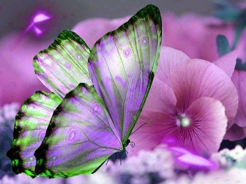 Image result for butterflies in nature