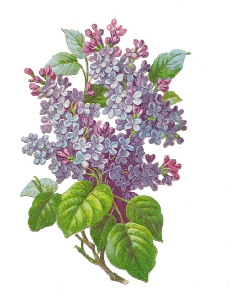 Victorian Die Cut Scrap Beautiful LILAC flowers Very Nice! scarce die cut