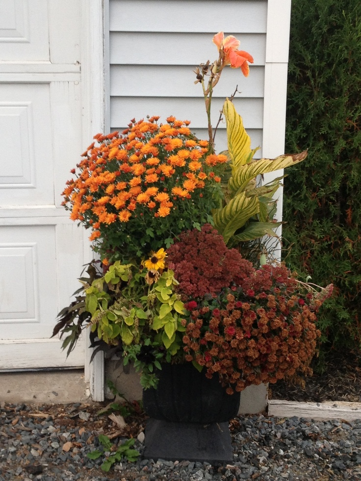 Fall pots flowers potted pinterest - Potted autumn flowers ...