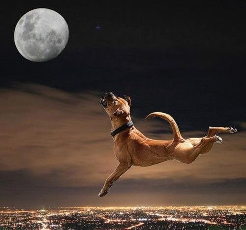 Jump at the moon