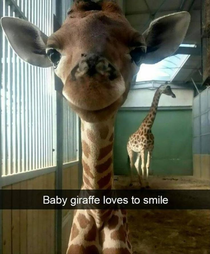 Funny pictures of animals smiling