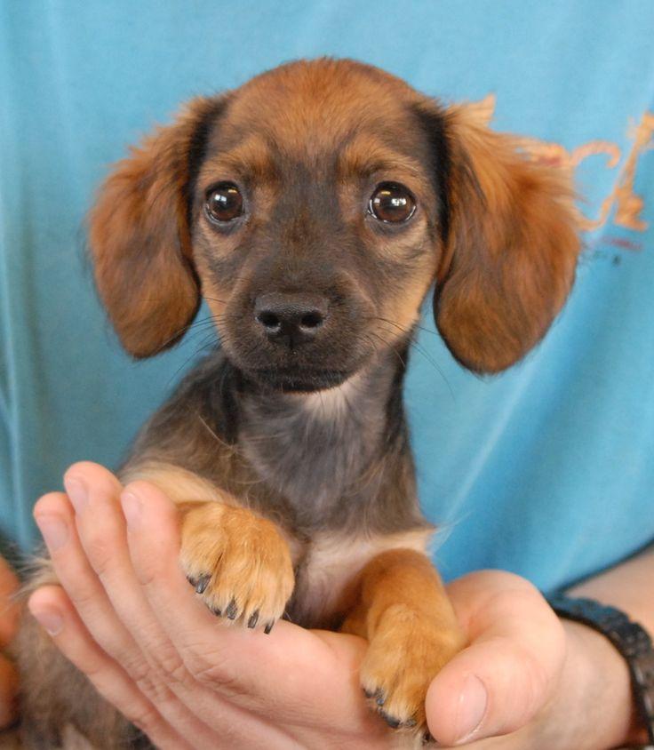 ... dog breeds scruffy dog breeds belgium dog breeds spanish dog breeds