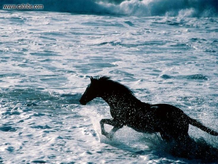 surf racer