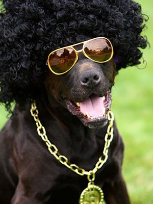 This is one funky dog! #pets #petcostumes #Halloween #Halloweencostumes
