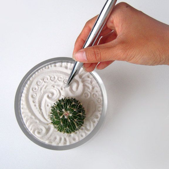 I Want A Mini Cactus Zen Garden Arts And Crafts Are My