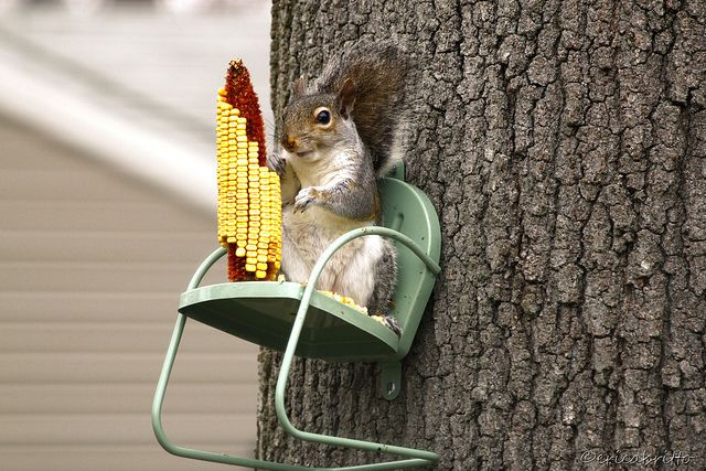 Fun Squirrel Feeders -- Let Your Squirrels Dine in Style