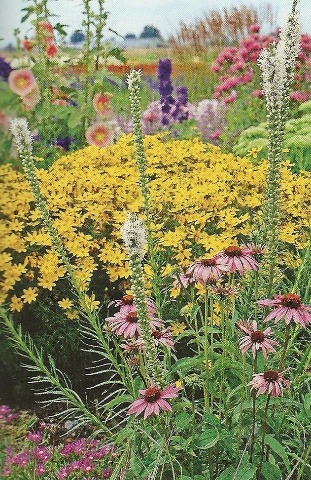 Sunny Backyard Ideas : sunny garden ideas  garden  Pinterest