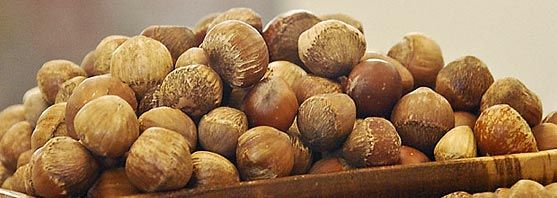 hybrid hazelnuts- national arbor day foundation members get three trial bushes