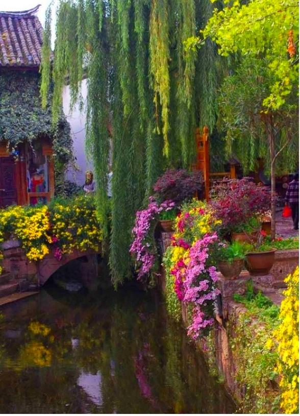 Most beautiful oriental garden plants oriental for Most beautiful garden trees