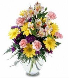 surpresa, flores contra gripe e resfriado