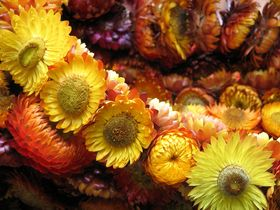 dried-flower-garland-by-sonnyleon.jpg | Thanksgiving ideas | Pinterest