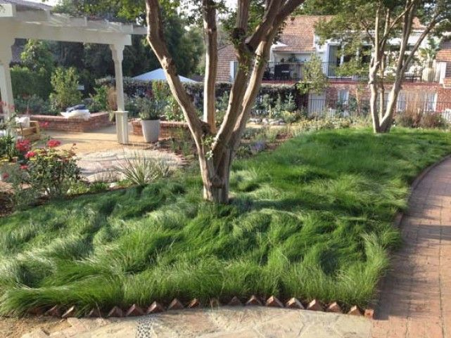 Tufted hair idealmow lawn garden muses pinterest