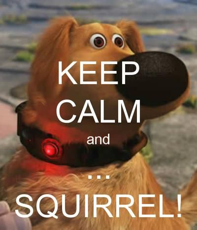 keep calm and squirrel keep funny pinterest