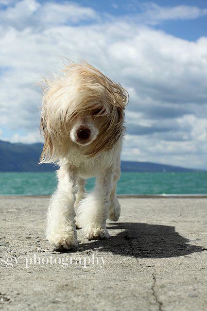 coolest dog hair