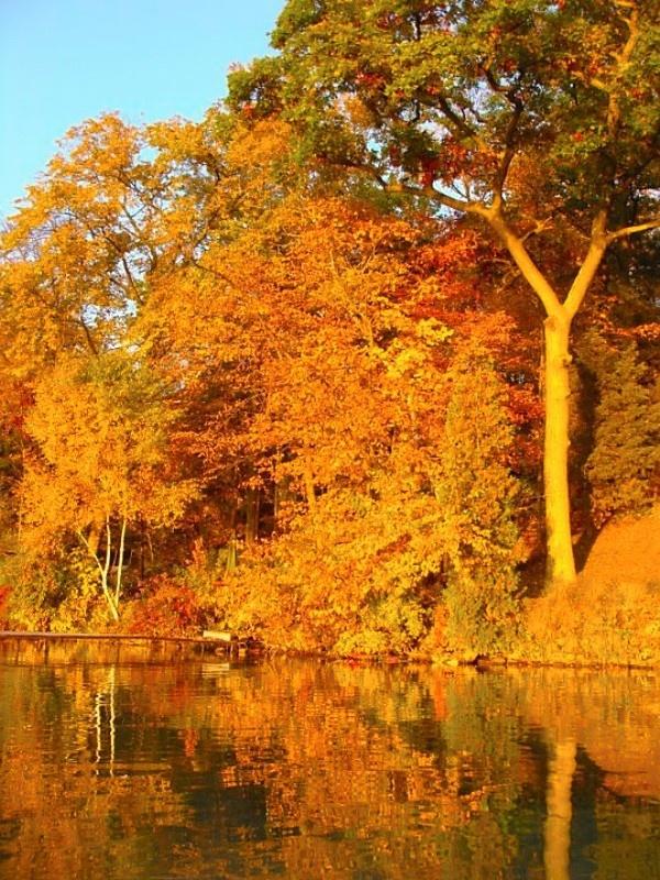 Fall in Wisconsin   :: Fall Love ::   Pinterest: pinterest.com/pin/228205906090191295
