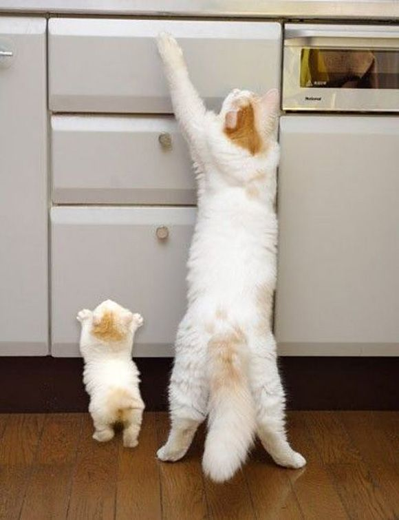 Help mommy, I can't reach!