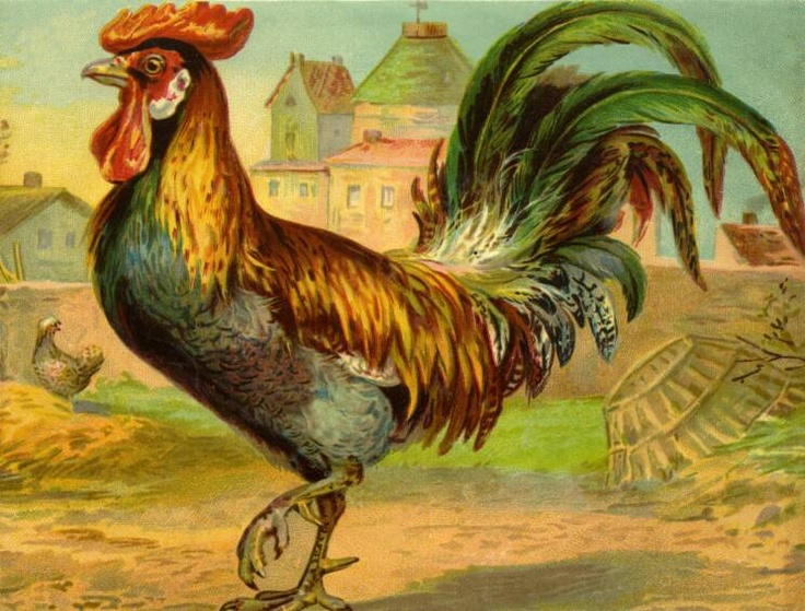 Rooster! | Roosters | Pinterest