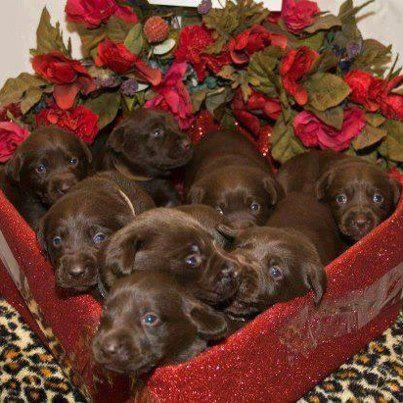 valentine's day box template