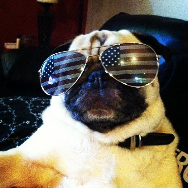 4th of july pug images