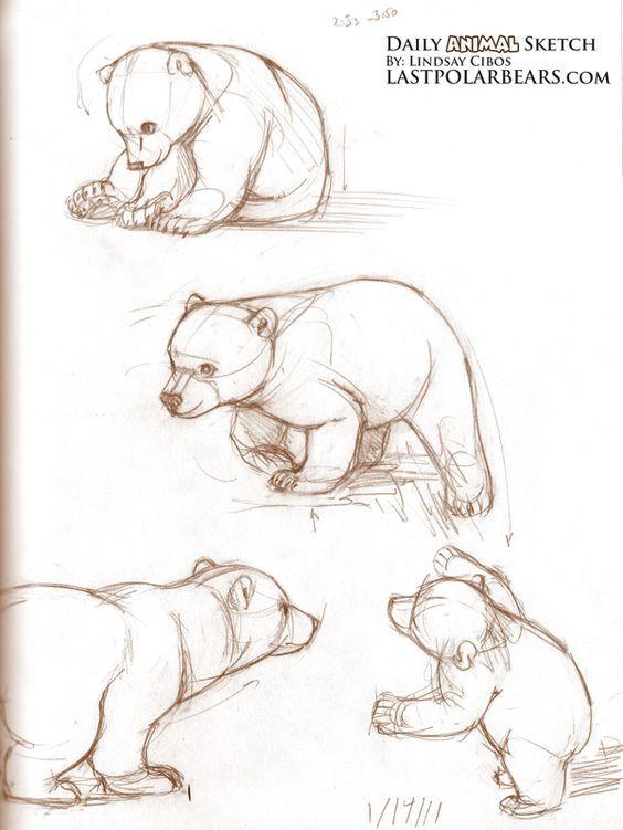 Baby bear cubs drawings