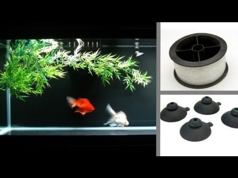 How To Anchor Plants Without Substrate Aquarium Designs Pinterest