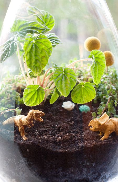 Themed terrariums! Put this in a big open container so kids can play (after discussing proper respect for the living plants) to give their beloved Dino play another dimension.