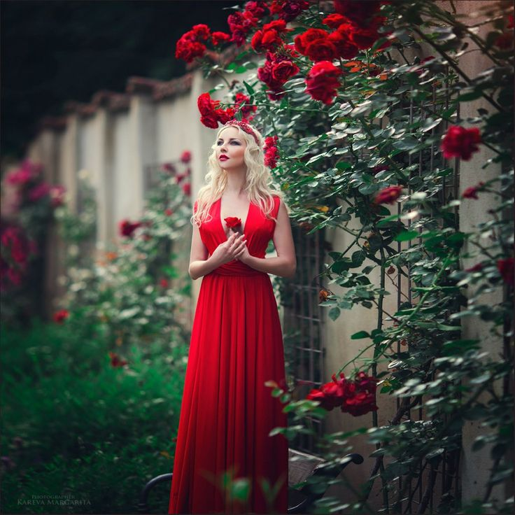 valentine rose fairyland