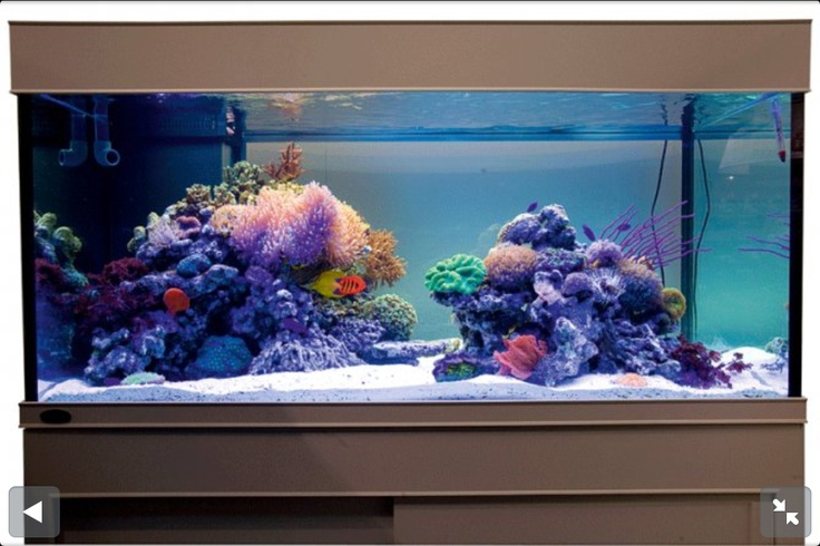 Reef tank saltwater fish aquarium salt water tank for Reef tank fish