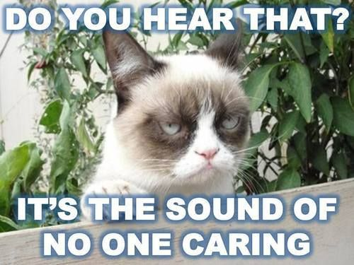 #humor #funny #lol grumpy kitty