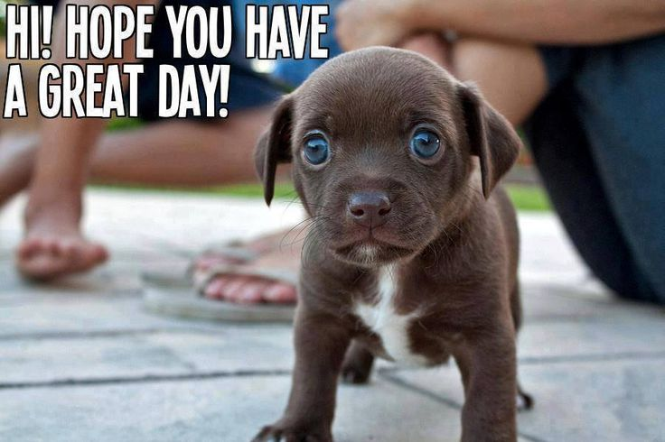 Image result for HAVE A NICE DAY PUPPY