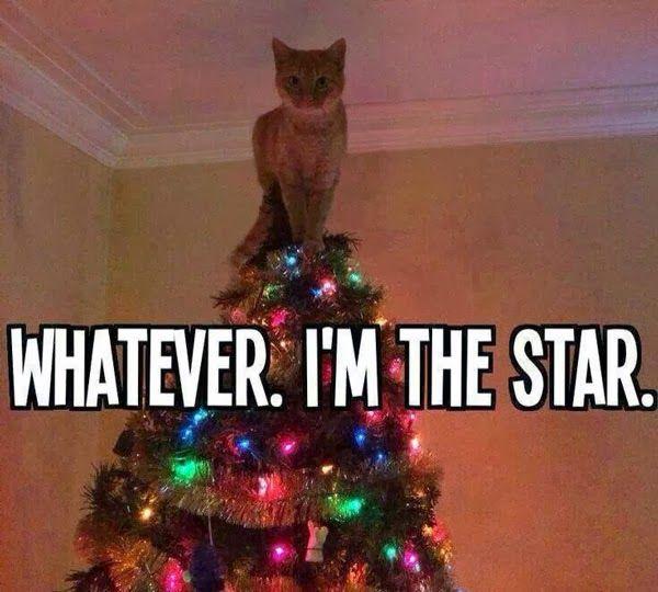 Fun Claw - Funny Cats, Funny Dogs, Funny Animals: Funny Pictures Of Cats - 22 Pics