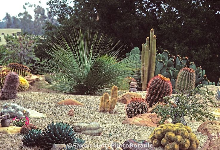 Cactus garden gardening landscaping ideas pinterest for Cactus garden designs