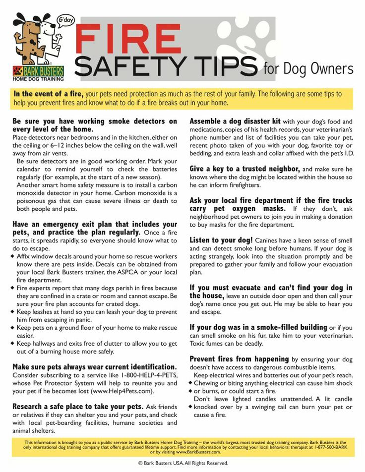 Pet Fire Safety Tips Safety And Awareness Pinterest