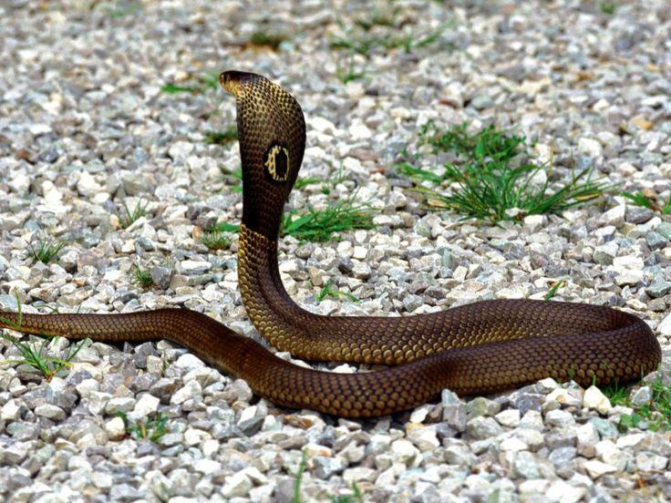 googl snake