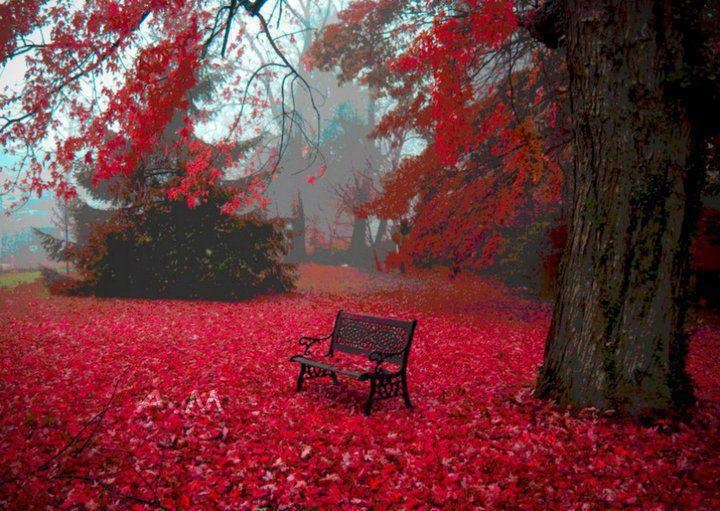 autumn leaves on bench - photo #4
