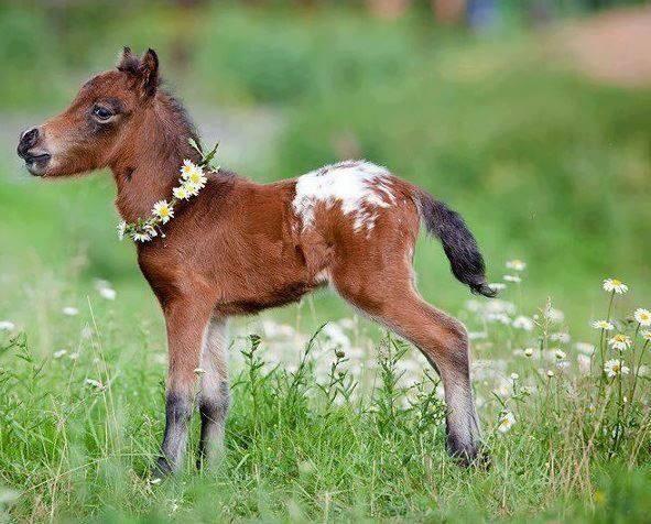 adorable baby horse