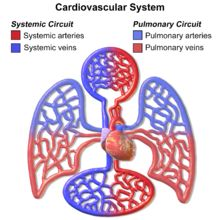 sports cardiologist
