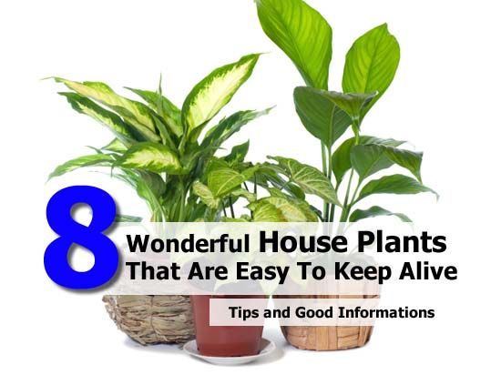 Pin by jean hawes fierbaugh on gardening pinterest for Easy to maintain bushes