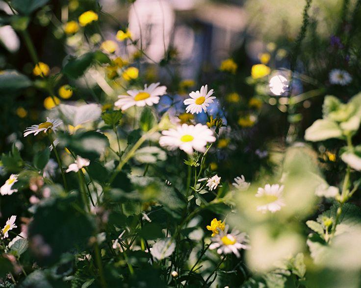 daisy print / kate miss.