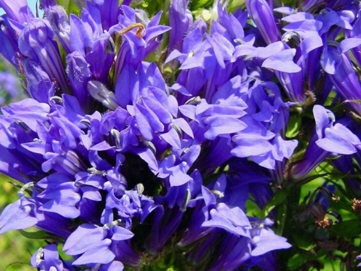 Pin by amy maxey on all things purple pinterest - What are blue roses called ...