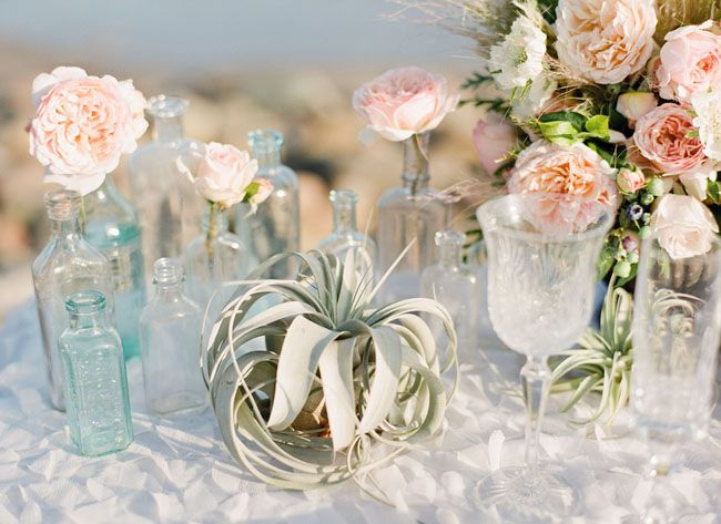 airplant table decor