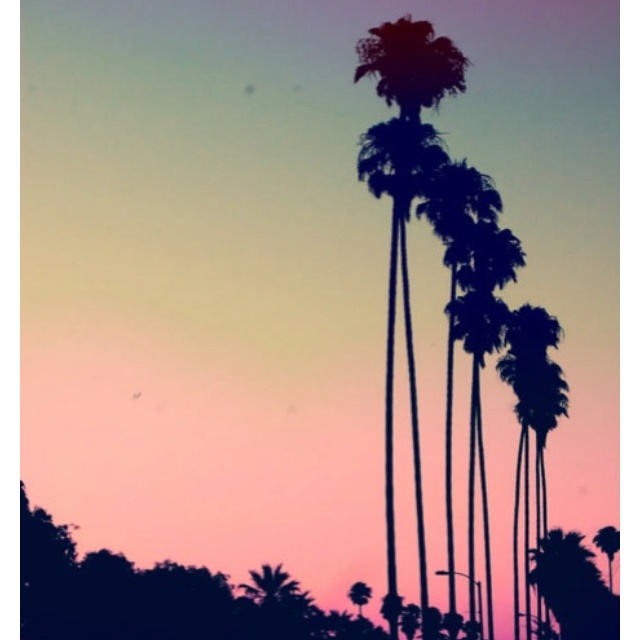 palm trees sunset tumblr - photo #30